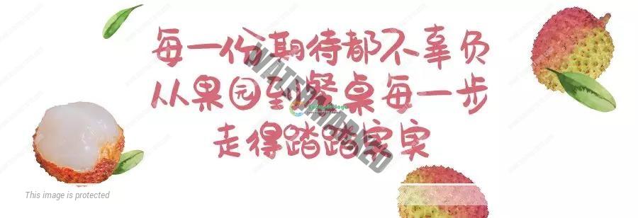 妃子笑荔枝 15