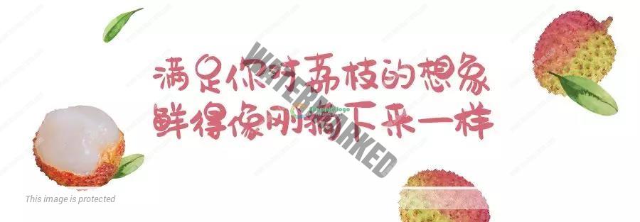 妃子笑荔枝 3